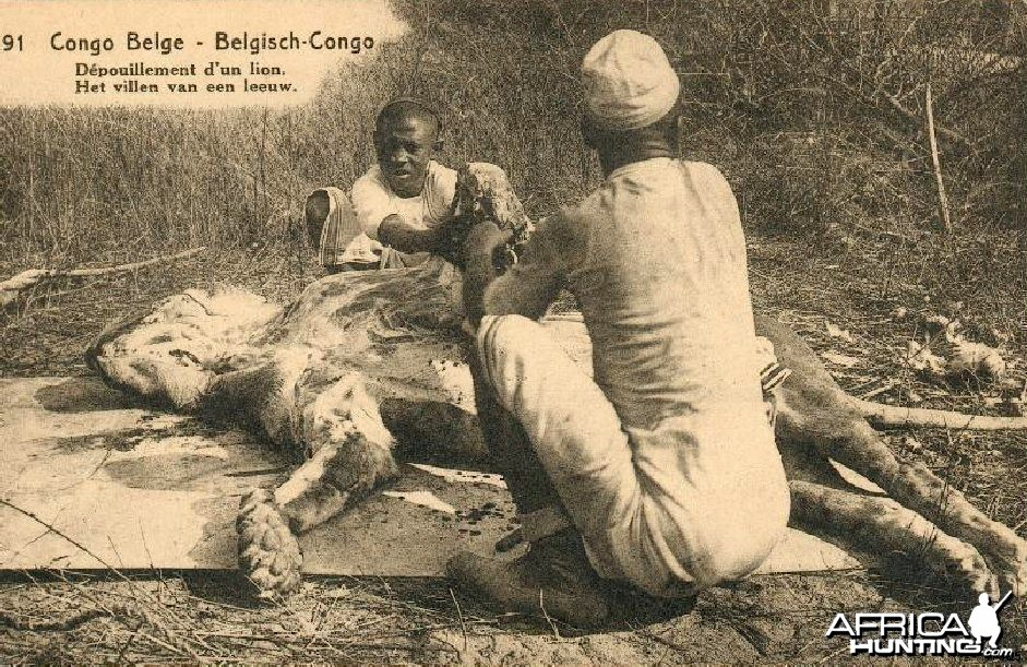 Hunting Belgian Congo, Lion