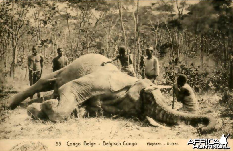 Hunting Belgian Congo, Elephant