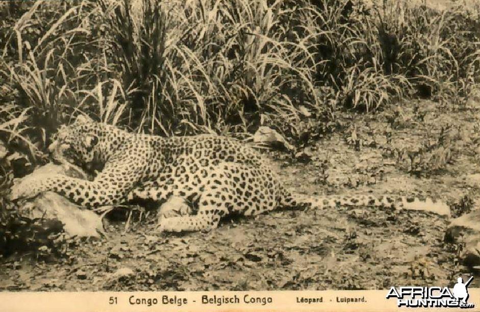 Hunting Belgian Congo, Leopard
