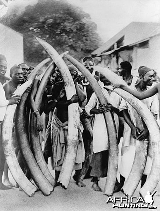 Men with ivory tusks, Dar es Salaam, Tanzania circa 1900