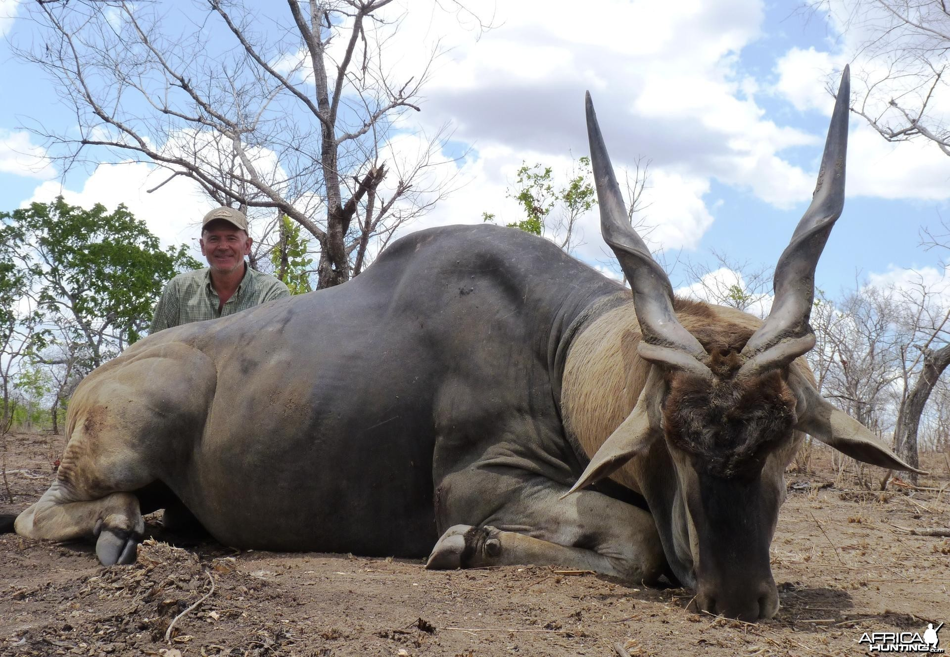 38'' east african Eland hunted in Tanzania