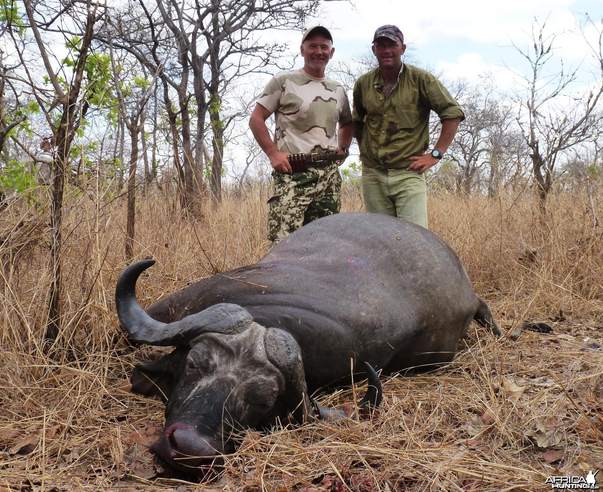 Old bull hunted in Tanzania