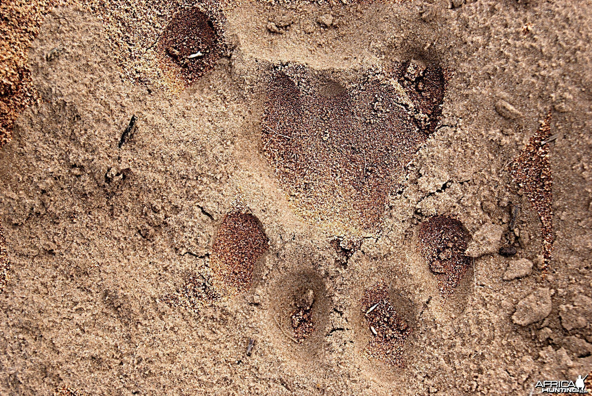 Lion Track South Africa