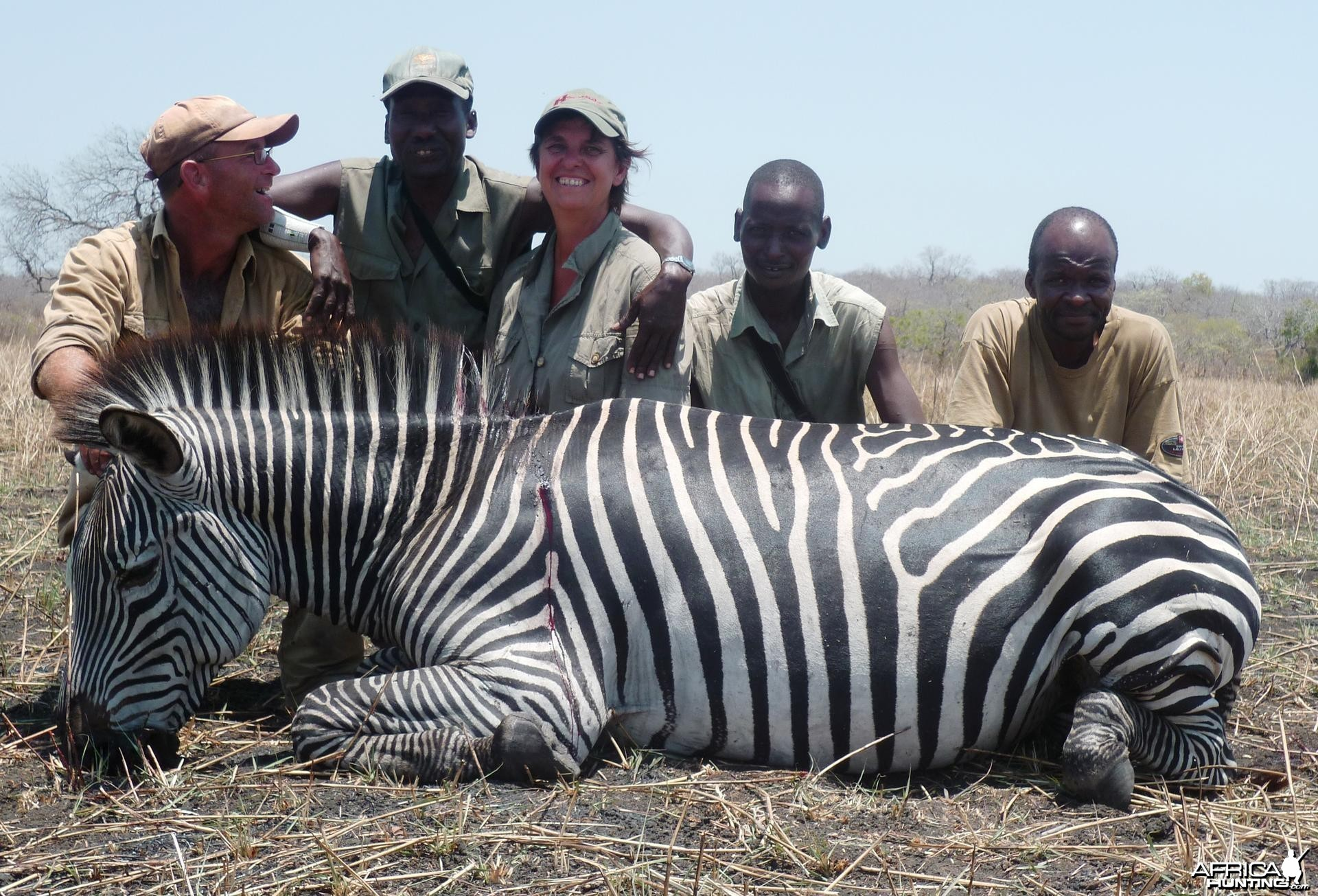 Zebra hunted in the Selous, Tanzania