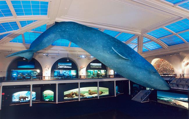 1-milstein-hall-whale_650.jpg