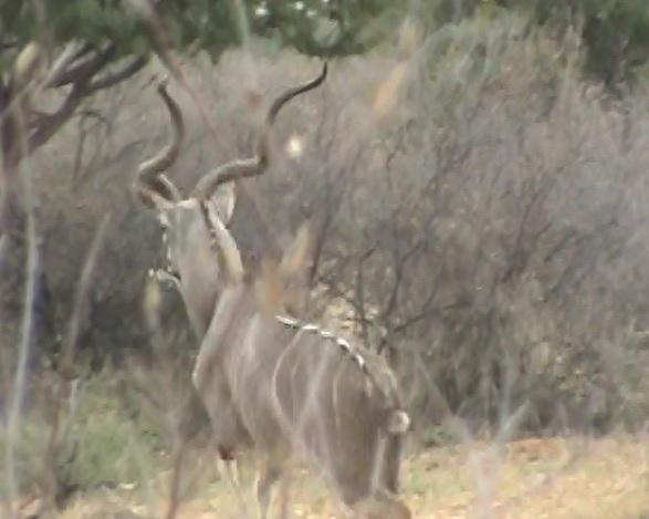 10.1 kudu.jpg