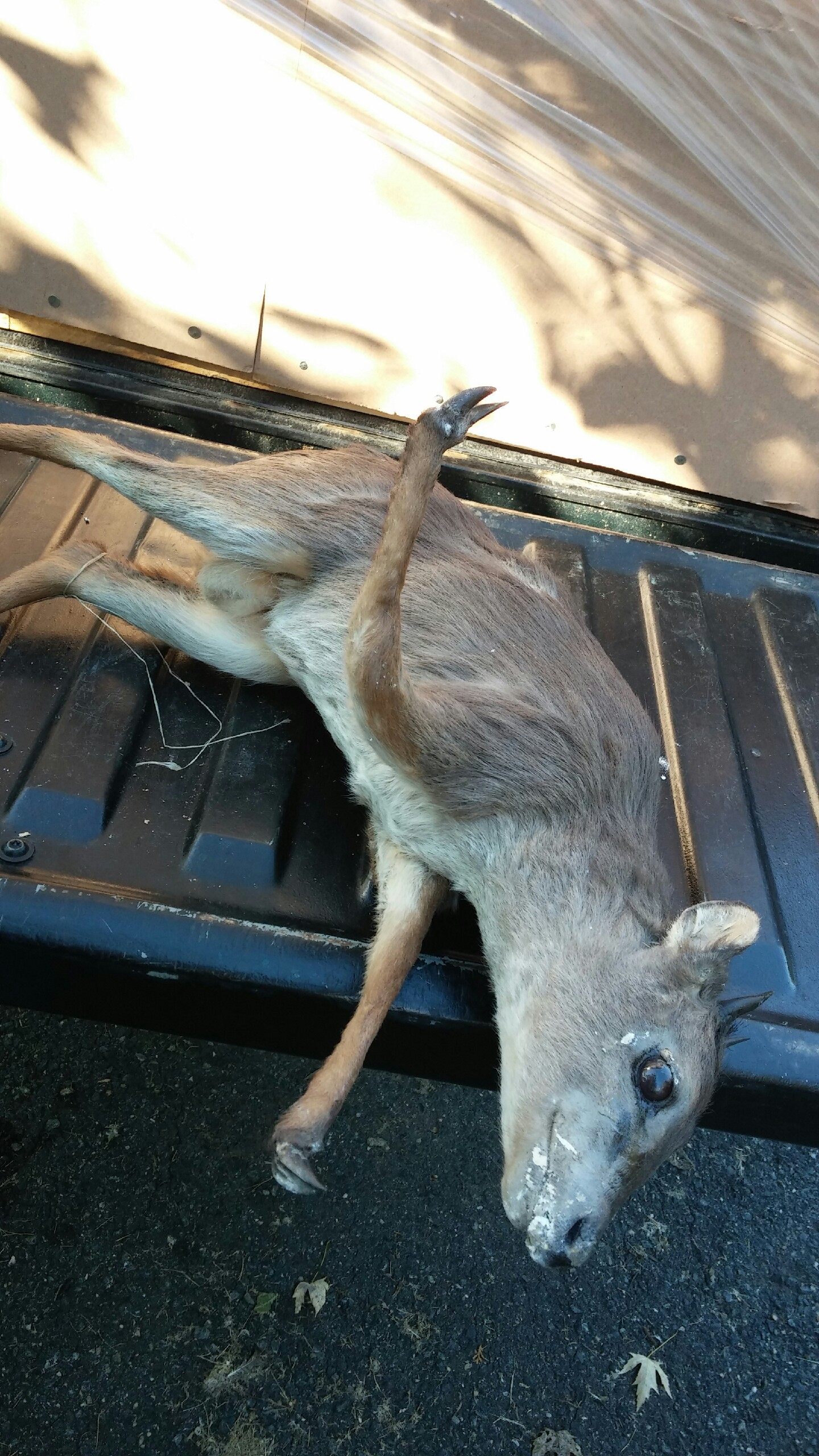 Immediate Credit Card >> Damaged Taxidermy from South Africa with Delta Airlines ...