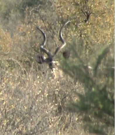 18.1  kudu 2.jpg