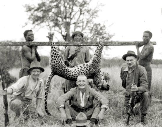 1920's leopard hunt in Swaziland.jpg