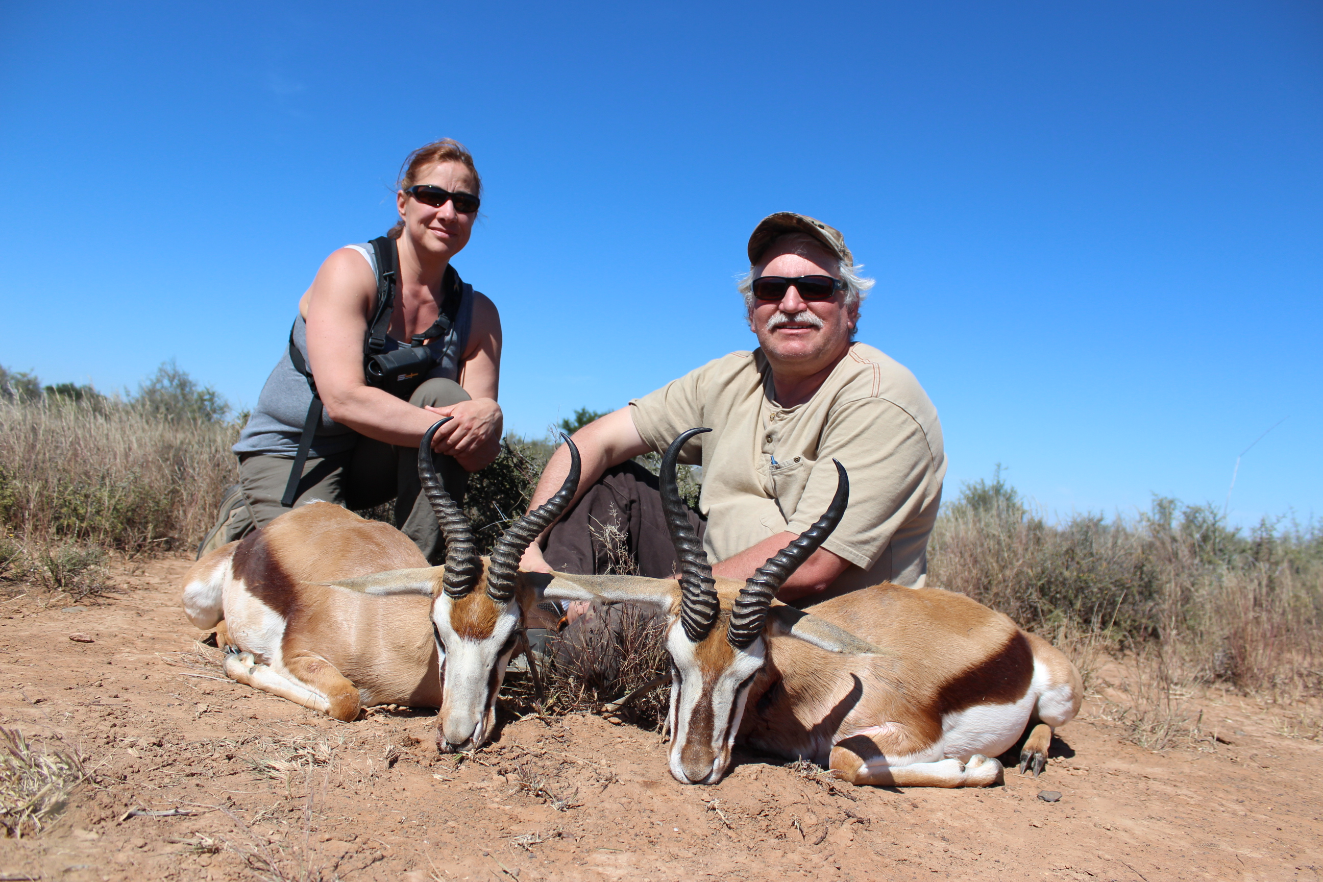 2 Common Springbok April 2014.jpg