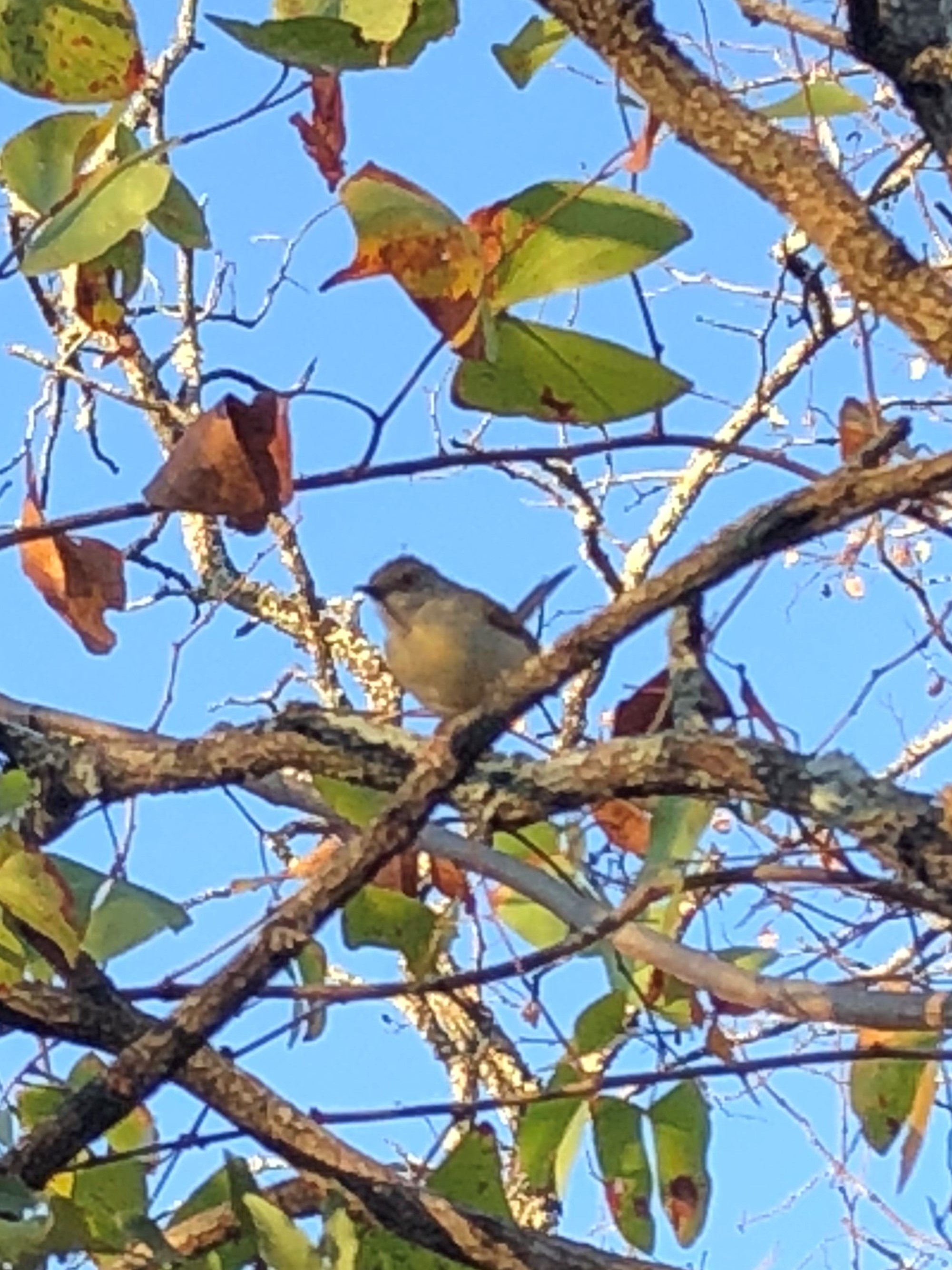 2.  little bird.jpg