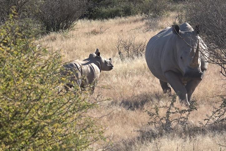 2 Rhinos.jpg