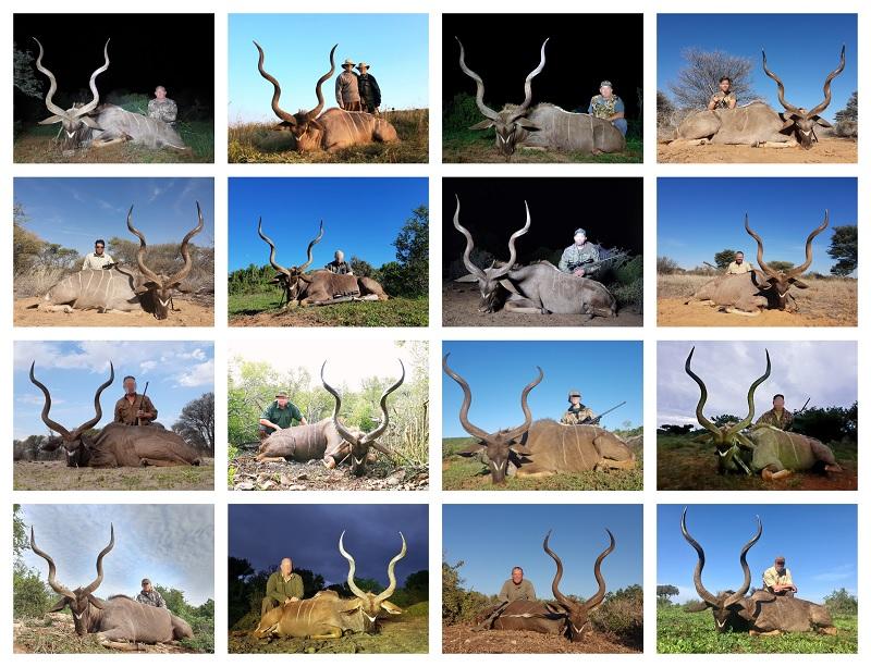 2019 Kudu collage.jpg