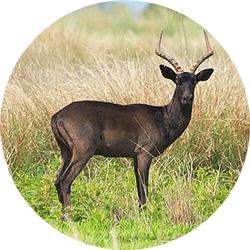 29_animals_black-impala-crop.jpg