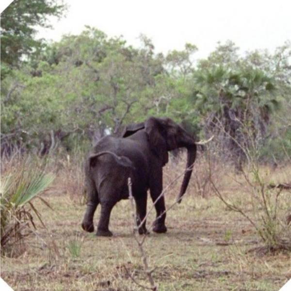 5616Grumpy_Elephant2.jpg