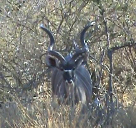 6.8 kudu bedded.jpg