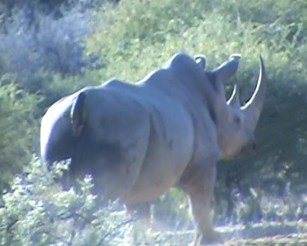 7.3 rhino.jpg