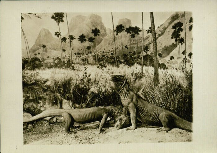 a-photograph-of-komodo-dragons-from-the-expedition.jpg