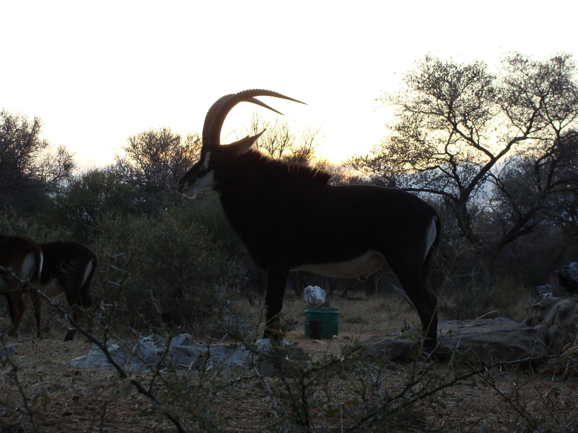 AFRICA 2011 151.jpg
