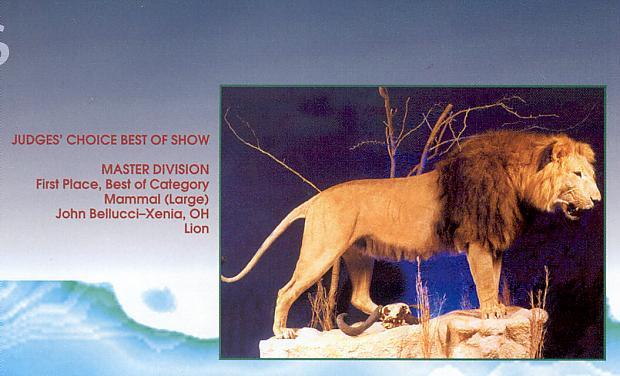 AfricanLion-BarbaryLionMount-36-Inside'Breakthrough'Magazine.jpg