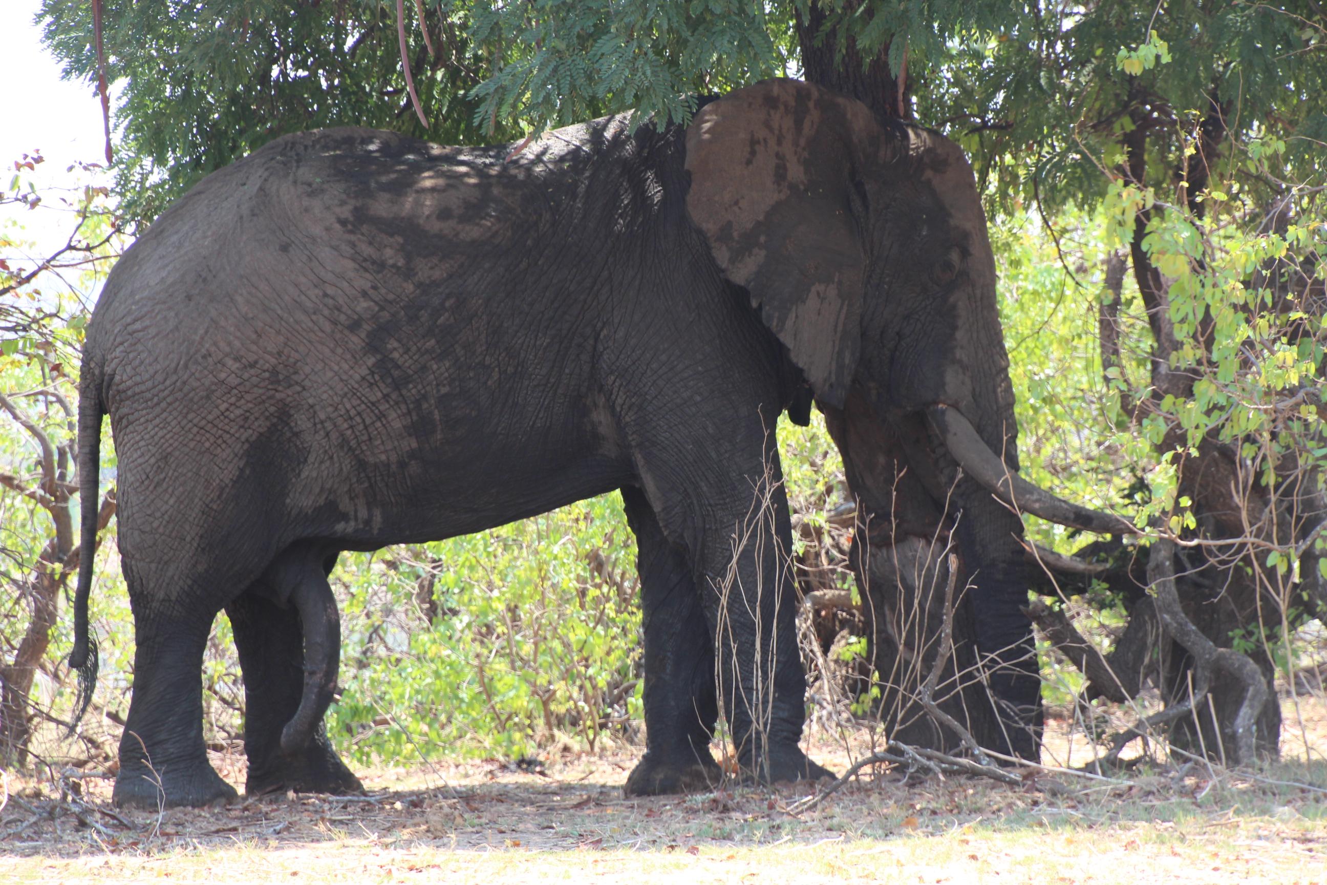 AfricaZimbabwe 1066.JPG
