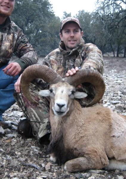 Armenian Mouflon (423 x 600).jpg
