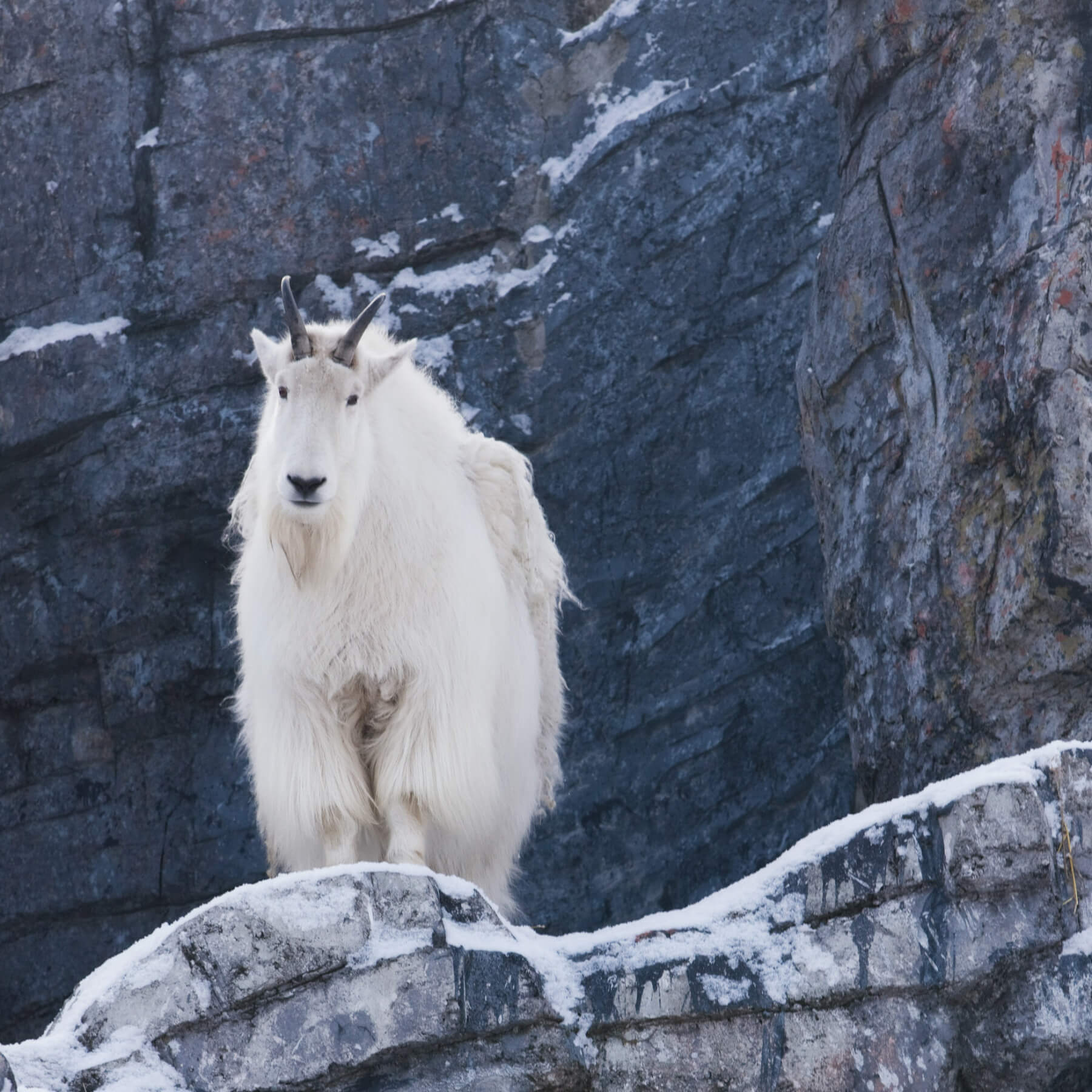 BC_MOUNTAIN-GOAT_TWEED-MEDIA-19.jpg