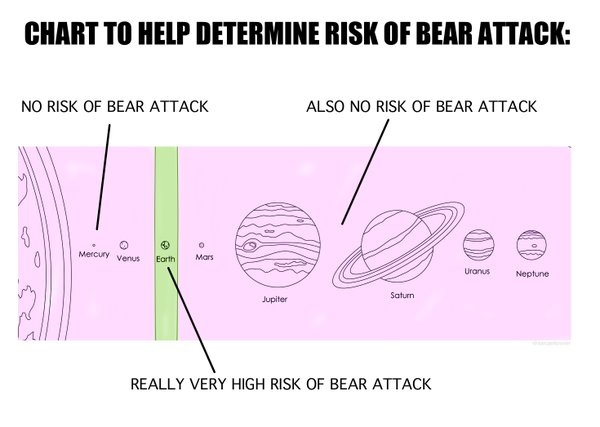bear attacks.jpg