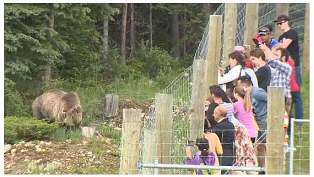 bear jam.jpg