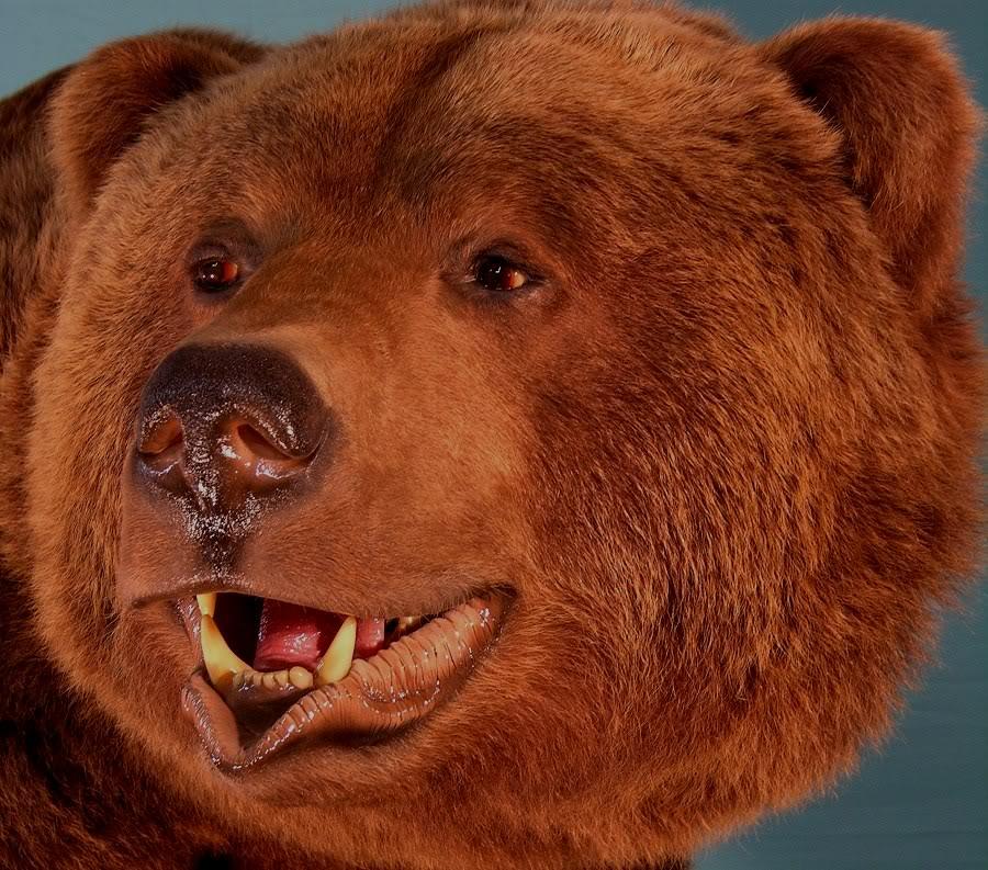Bear_2-Copy.jpg