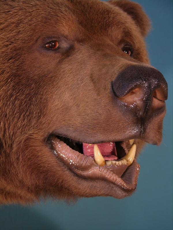 Bear_3-Copy.jpg