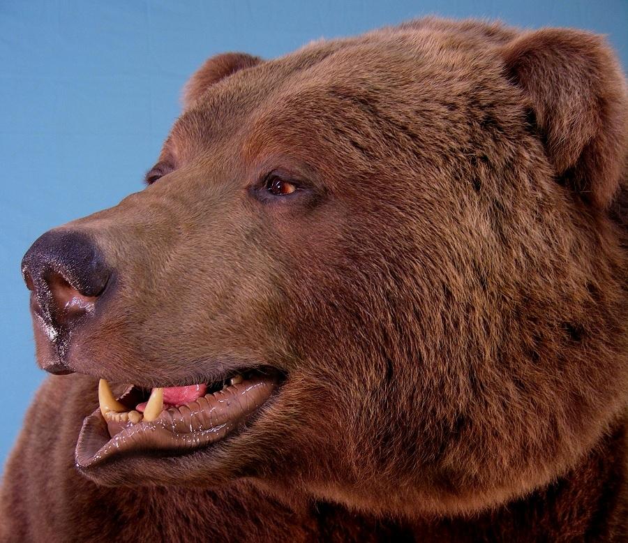 Bear_4-Copy.jpg