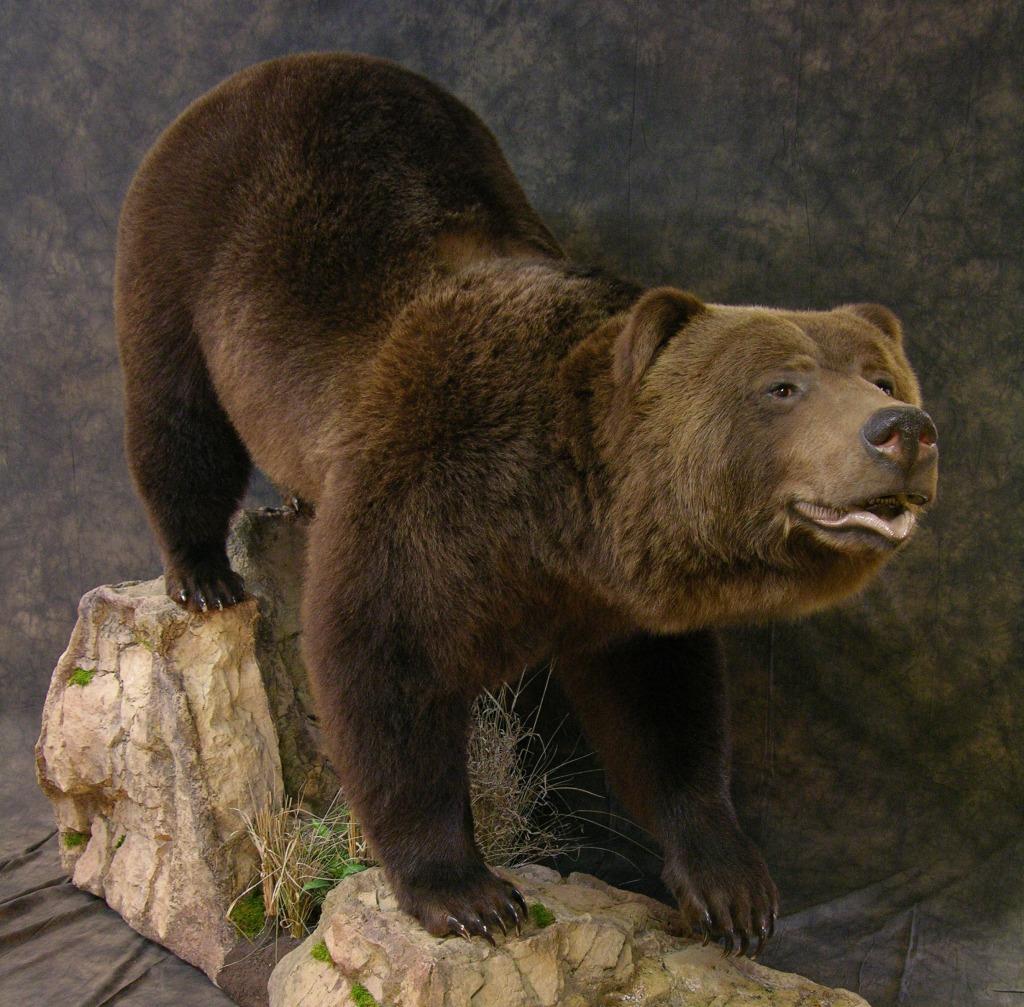 Bear_5-Copy.jpg