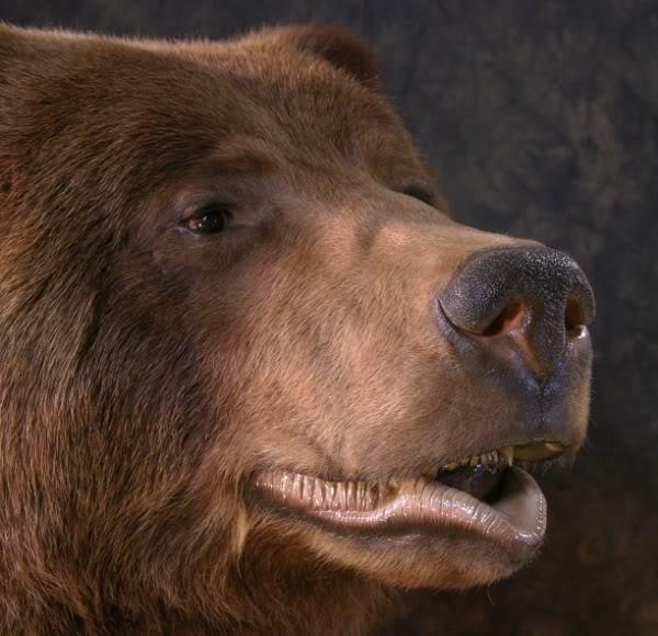Bear_7.jpg