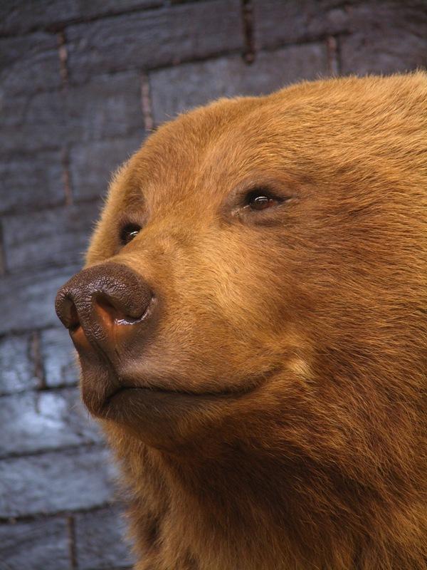 Bear_8.jpg