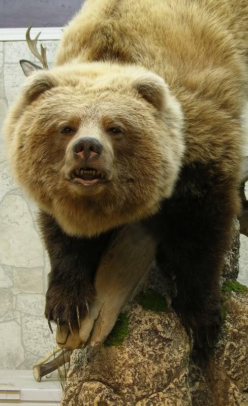 Bear_a.jpg