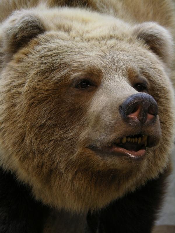 Bear_b.jpg