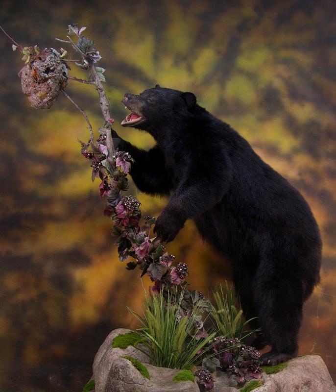 Bear_e.jpg