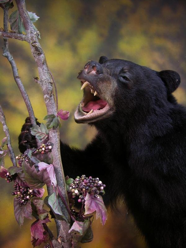 Bear_f.jpg