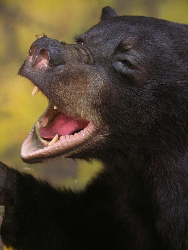 Bear_g.jpg