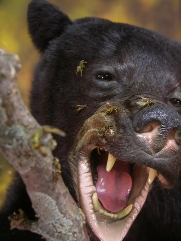 Bear_h-1.jpg