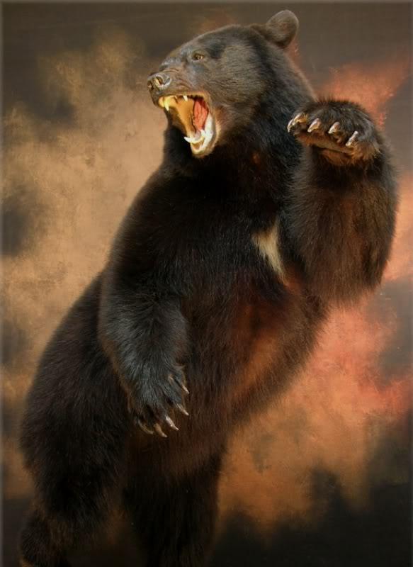 Bear_j.jpg