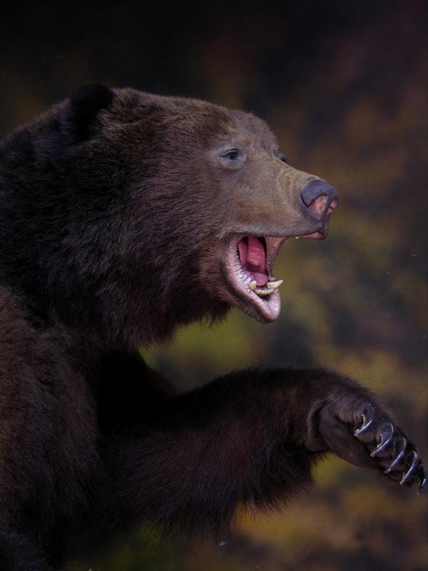 Bear_X.jpg