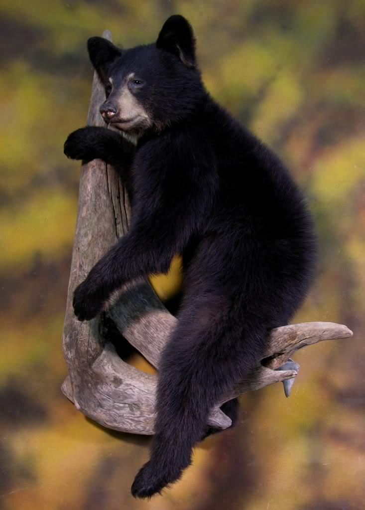 Bear_xxxxx.jpg