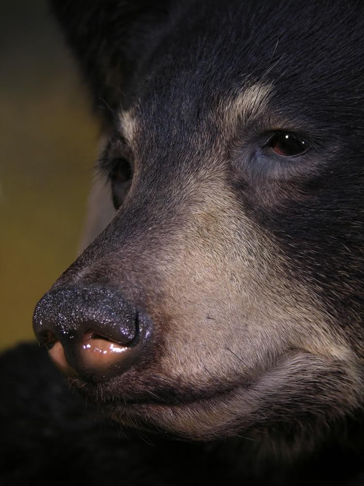 Bear_xxxxxx.jpg