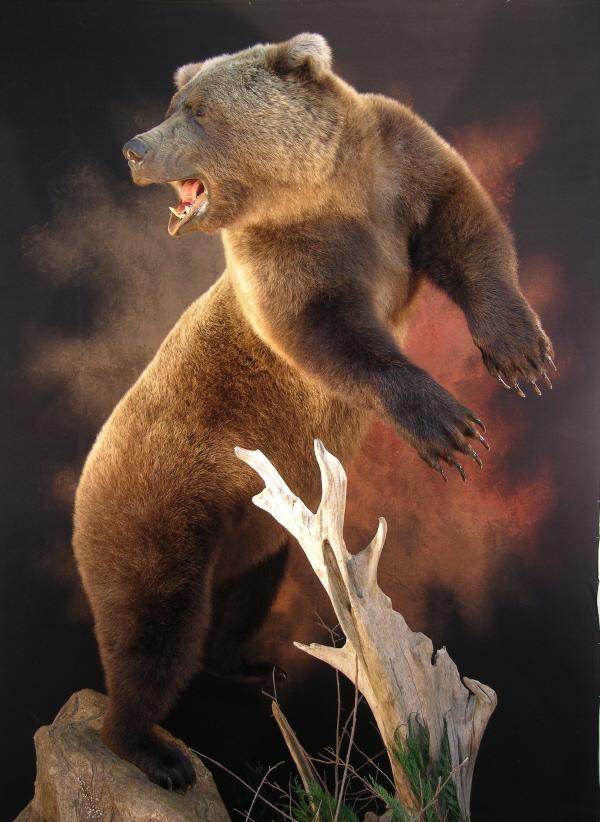 Bear_xxxxxxx.jpg
