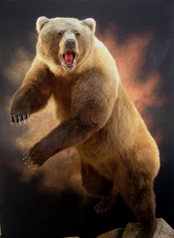 Bear_xxxxxxxxx.jpg