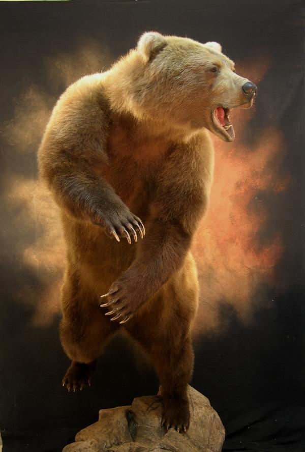 Bear_xxxxxxxxxxxx.jpg