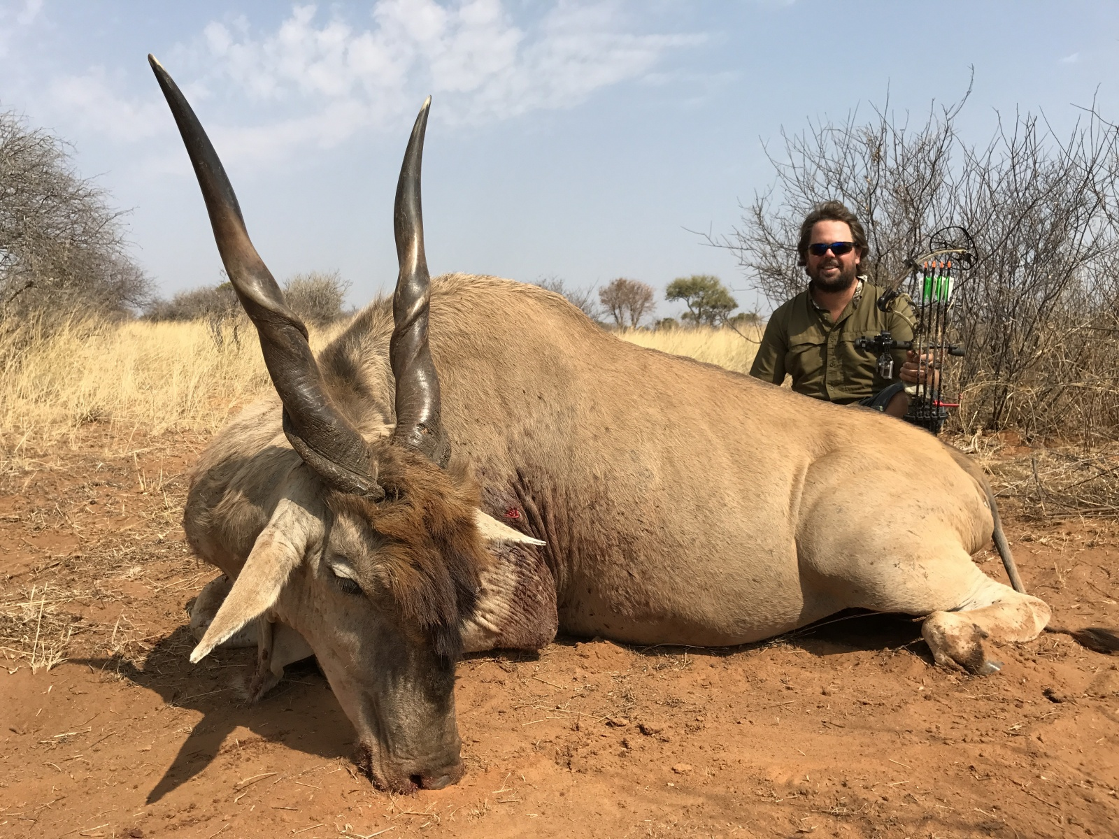big eland bow.jpg