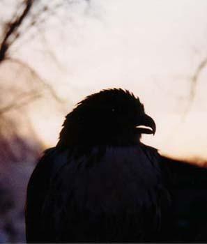 birdhead.jpg